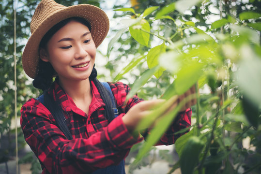 Close up women farmer  hand keeping chilli pepper plant in the garden.