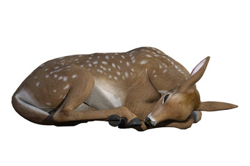 Res baby deer / fawn isolated on white, 3d render