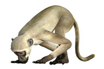 Cute white monkey isolated on white, 3d render