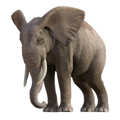 Grey Elephant isolated on white, 3d render