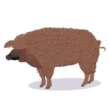Mangalica pig cartoon