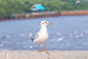 Seagull standing on a bridge, background, flocks of seagulls flying.