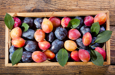 fresh colorful plums in a wooden box
