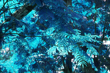 Blue tropical leaf forest background. High contrast.