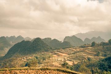 rice paddys fill this Vietnam scene