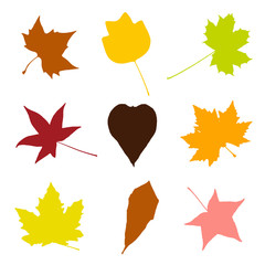 Collage of colorful autumn leaves, drawing objects