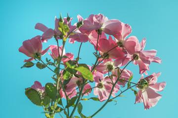 凛と咲く花