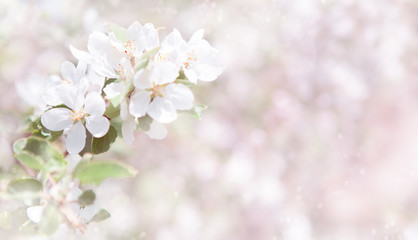 Blurred white and pink Spring Nature background