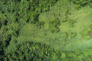 森、鳥瞰図