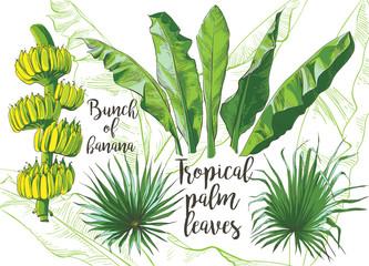 Vector tropical banana leaf, fruits texture