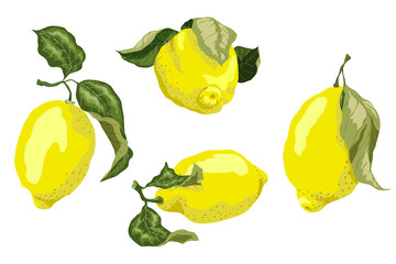 Set with juicy lemon fruits in graphic colored design vector drawing