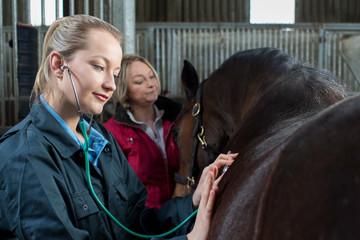 Female Vet Giving Medical Exam To Horse In Stable