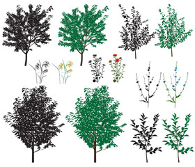 Several species of trees and flowers in color images and silhouettes