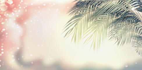 Summer tropical nature background with palm leaves , sunshine and bokeh in pastel color