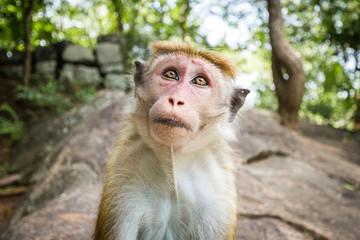 The monkey sits on a rock