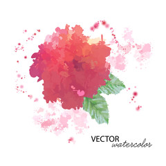 Watercolor Peony Flower