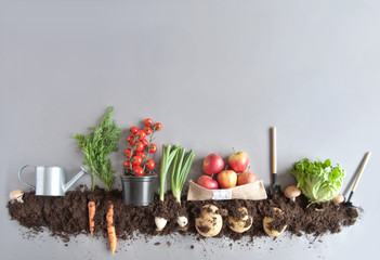 Keuken foto achterwand Groenten Organic fruit and vegtable garden background