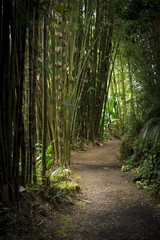 A path in a bamboo forest in Maui, Hawaii
