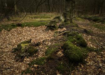 Winter Rural woodland forest landscape
