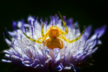 Close up spider and home - Stock Image