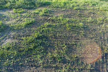 Green Grass Ground