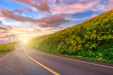 Empty asphalt road through Mexican sunflower flower field to sunset sky at Mae Hong Son Province, Thailand.