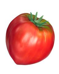 Cuor di bue, oxheart tomato, top, paths