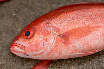 Red Snappers from the Gulf Of Mexico, fresh and on display after a fishing trip.
