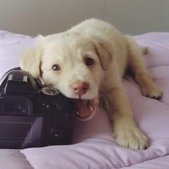 Masticazione del cucciolo