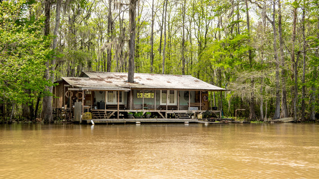 A cajun fish camp in the swamp is gradually being flooded and taken back by the rising waters.