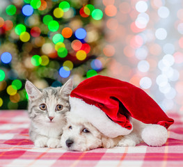 cat and bichon frise puppy in red santa hat  on a background of the Christmas tree