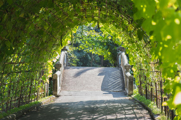 Green tunnel: arched trellis covered with ridge gourds (and cucumbers) in Suan Luang King Rama IX Park in Bangkok, Thailand. Vegetables used as ornamental plants