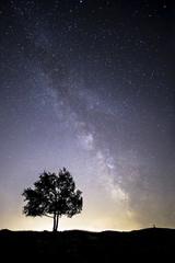 Un arbre et un ciel d'été étoilé
