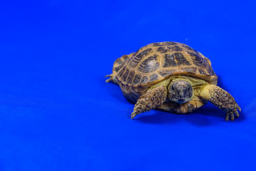 turtle on a blue background
