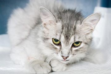 Cat hospitalisation