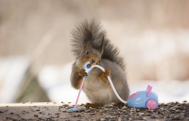 Red squirrel is holding a vacuum cleaner