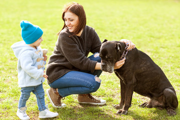 Mother and daughter in the park walking with their big dog Cane Corso