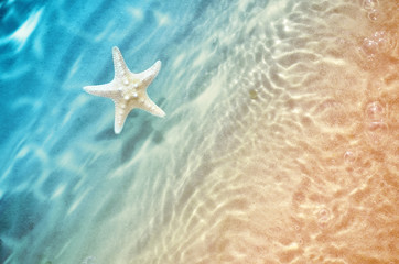 starfish on the summer beach in sea water.