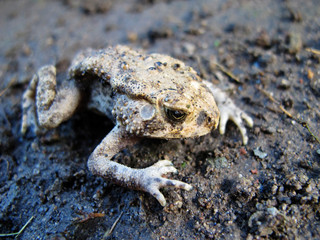 Cool frogs lay on the ground