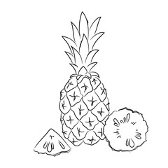 vector contour pineapple fruit coloring book hand drawn