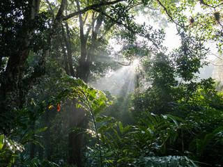 Sonnenaufgang im tropischen Wald
