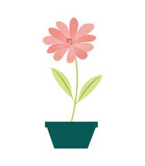 flower daisy in a pot decorative vector illustration design