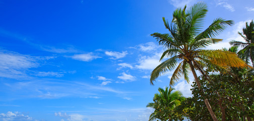 Caribbean sea and palm trees background.