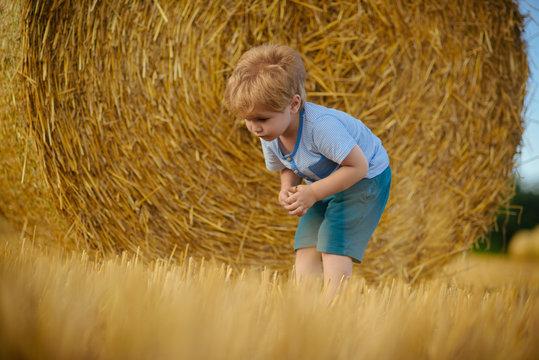 Agritourism, summer on farm, harvest season