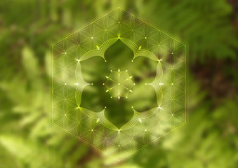 "Vector template of banner, horizontal format; Spiritual sacred geometry; ""Flower of life"" and lotus on psychedelic photographic background with green grass; Yoga, meditation and relax."