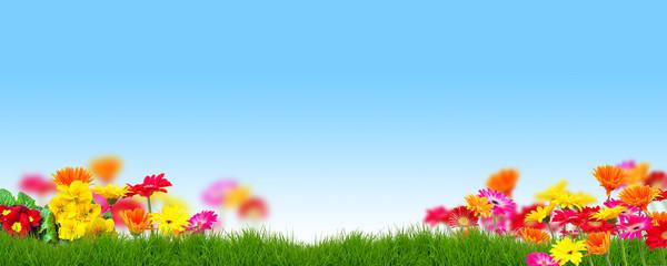 Hintergrund Text Frühling Sommer Blumen