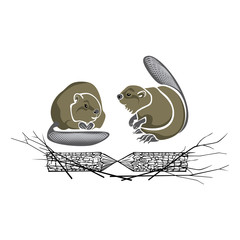 Two beavers with a log and branches