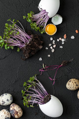 Fresh quail eggs and watercress on a black background..