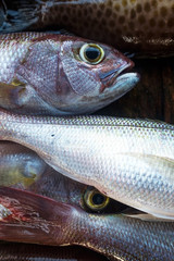Fresh white snapper detail. Close up view of fish
