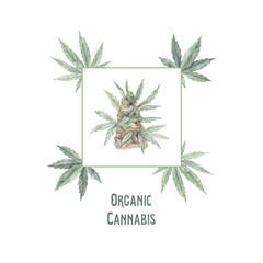 Hand drawn watercolor illustrations - Medical cannabis. Marijuana. Perfect for invitations, greeting cards, posters, prints